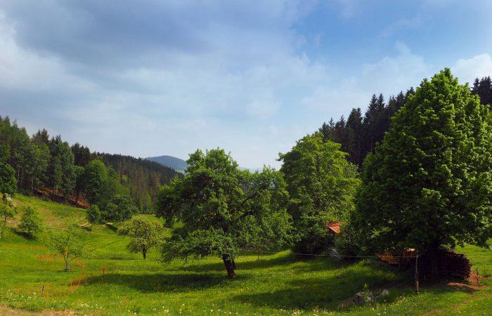 Ausblick auf den Hof und die Landschaft des Mühlviertels in St. Leonhard b. Fr.