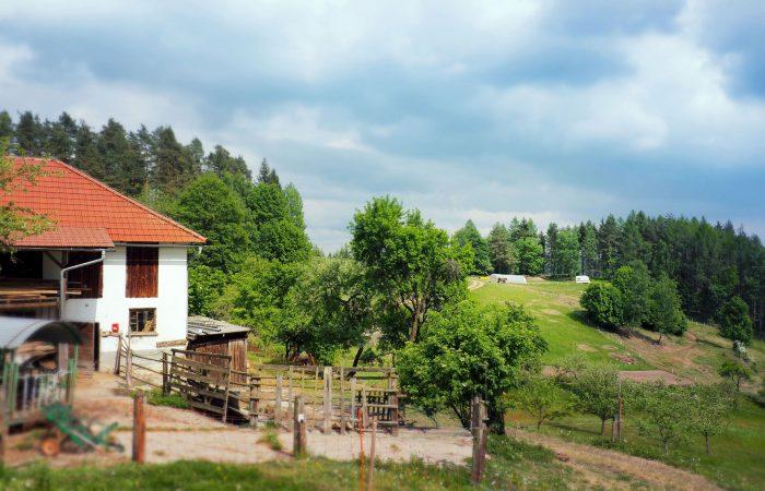 Ausblick auf den Bio-Bauernhof und auf die Ferienwohnung der Familie Gutenbrunner in Sankt Leonhard bei Freistadt