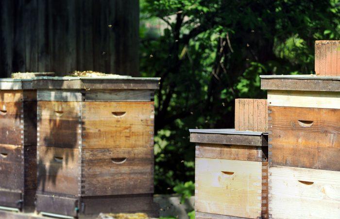 Aus den Bienenstöcken gewinnen die Gutenbrunners Bienenhonig