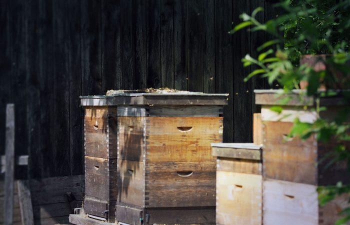 Aus den Bienenstöcken gewinnt Johann Gutenbrunner Honig