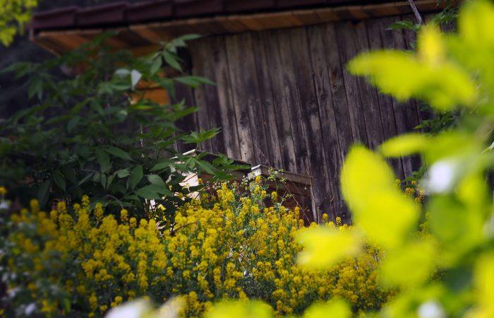 Die Bienen produzieren biologischen Blütenhonig